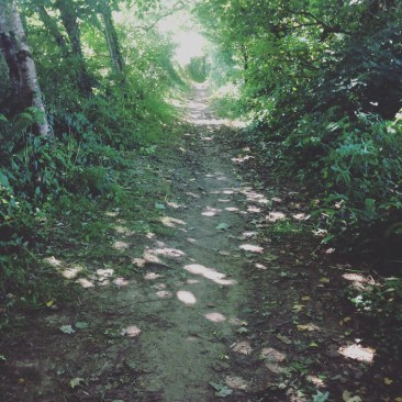 hidden path and trees