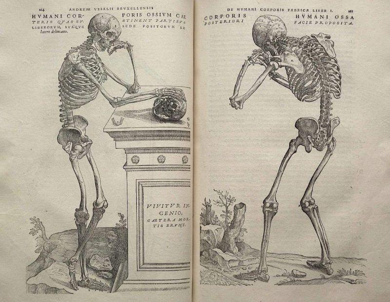 Fragmentos de De humani corporis fabrica en los que se habla sobre la historia de la cirugía