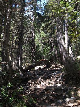 Zona boscosa