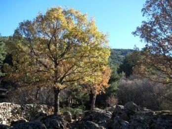 ruta-cascada-del-purgatorio-10