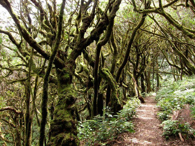 itinerario de una semana por las Islas Canarias