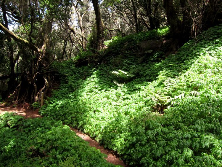 4 rutas ciruculares en el Parque Nacional de Garajonay, La Gomera