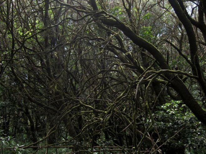 islas-canarias-dia6-