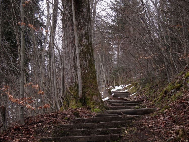 alemania-ruta-romantica-64