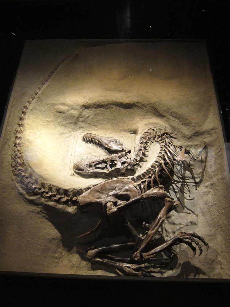 canada-02-drumheller-dinosaur-provincial-park-11