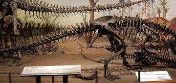 canada-02-drumheller-dinosaur-provincial-park-fi