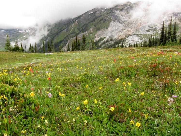 canada-07-glacier-national-park-14