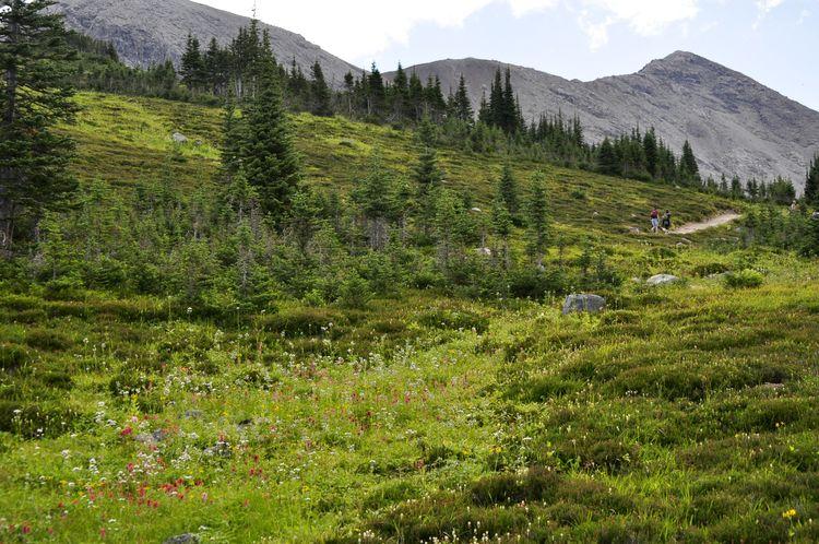 canada-09-jasper-national-park-11