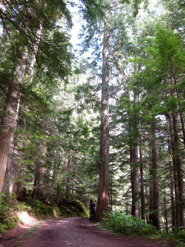 Parque Provincial Mount Robson