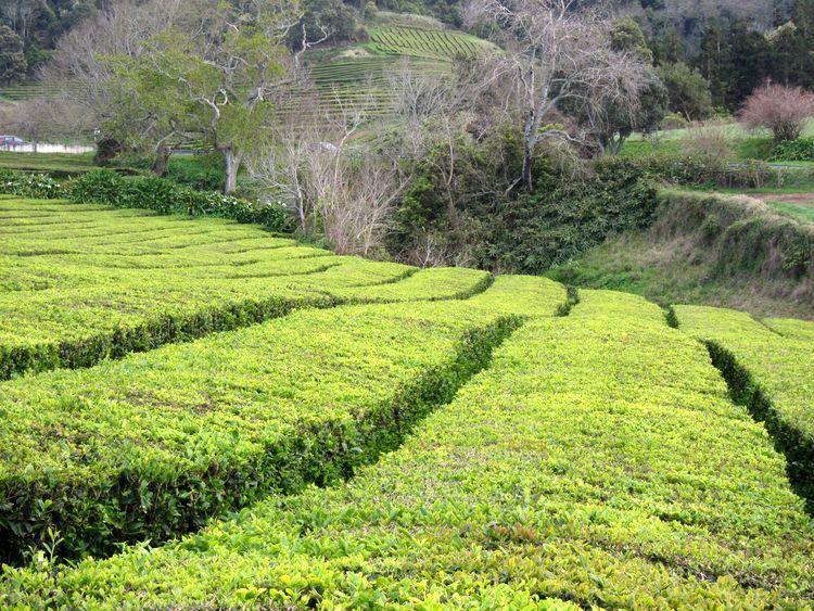 Qué ver en el concelho de Ribeira Grande, Azores.