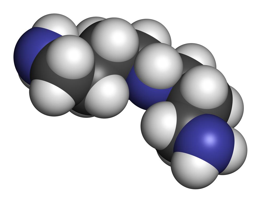 espermidina