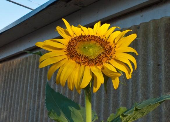 Blooming in El Paso