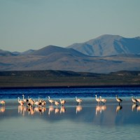 Mendoza: la laguna de Llancanelo puede desaparecer por culpa del fracking