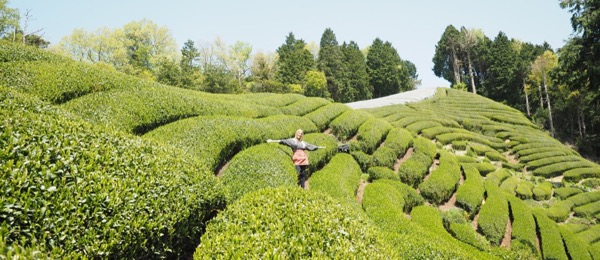 cata de té japones