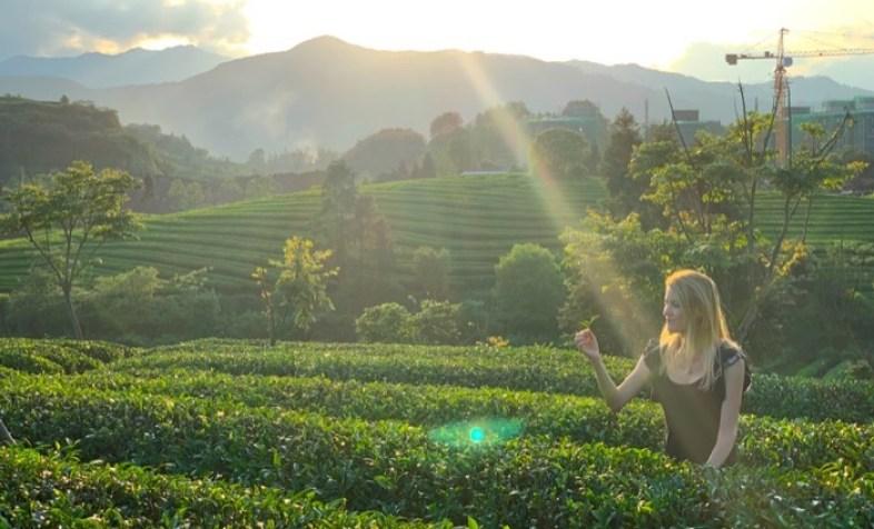 campos de Camellia sinensis en Fujian China con Victoria Bisogno
