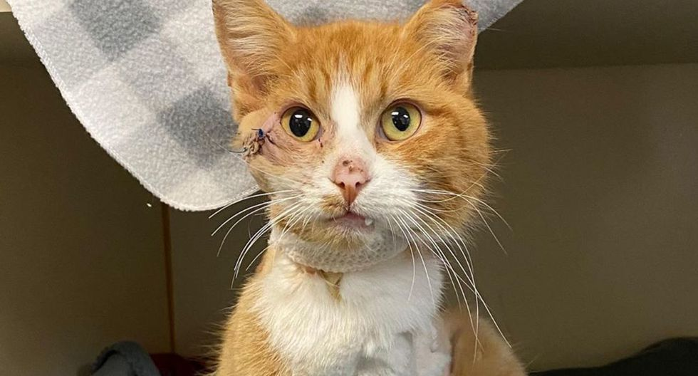 VIRAL on Instagram | 'Cupid', the cat that was cruelly attacked with an arrow on Valentine's Day | Viral | Social Networks | Curiosities | United States | Virginia | Spain | Mexico | Viral animals