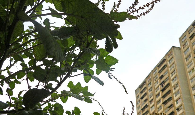 La pira está relacionada con el paisaje urbano de la capital venezolana.