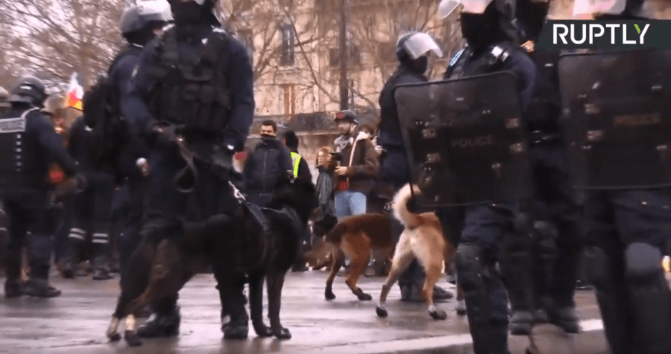 Police dogs at the Bastille Square in Paris. © Ruptly