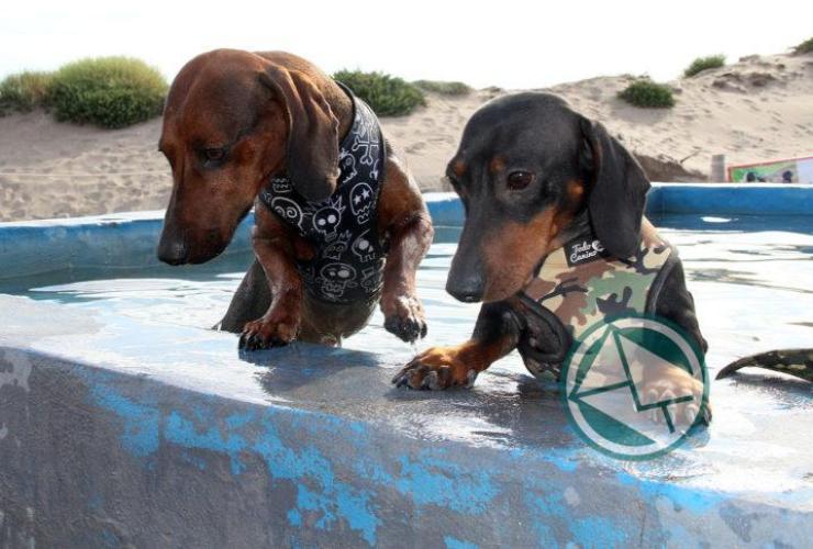 Mar del Plata cuenta con playa exclusiva para mascotas01