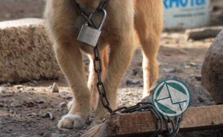 Organizaciones nacionales peticionan el aumento de penas contra el maltrato animal