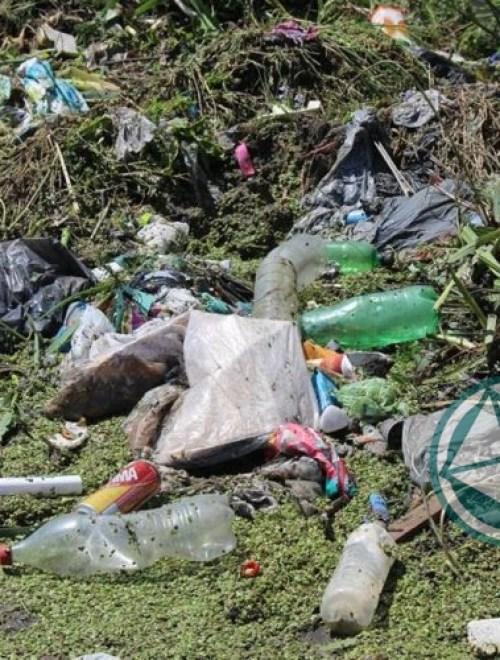 Limpieza de arroyos y zanjones en el barrio El Molino de Ensenada 4