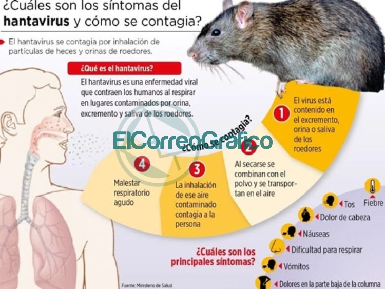 Recomendaciones del Municipio de Berisso para prevenir casos de hantavirus