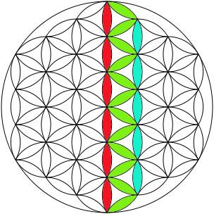 Tercera fila flor de la vida