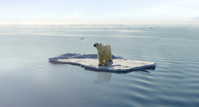 Cambio-climatico-y-extincion-de-los-animales-2