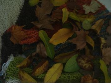 folhas de otono