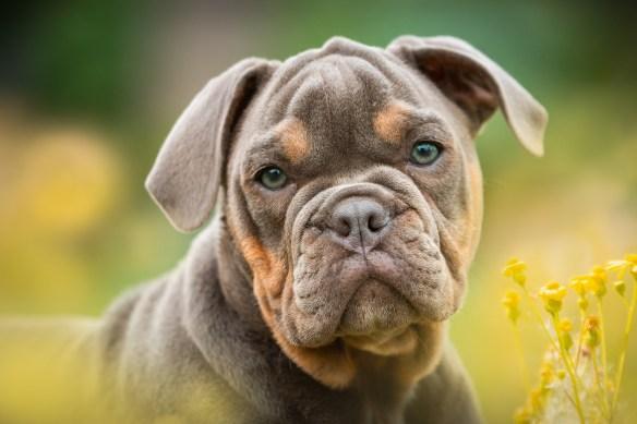 puppies-4233378_1920