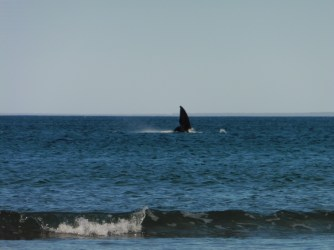 2016-6-13 Whales 4
