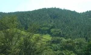 En RD  se ejecutan programas para la   reforestación.