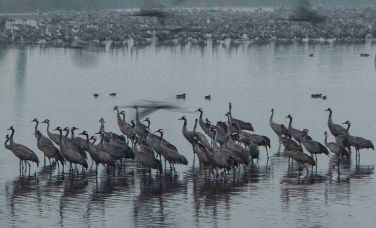 Valle del Hula, escala de 500 millones de aves
