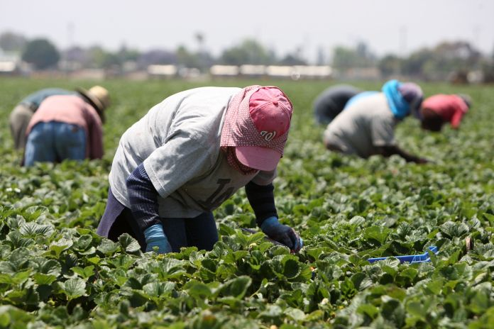 Celebrities unite to help the other heroes of the pandemic: agricultural workers