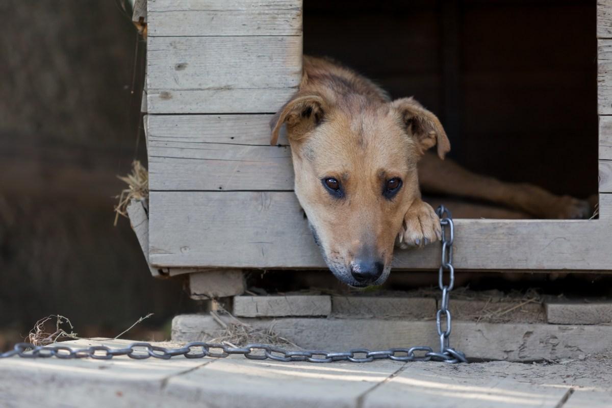Muere perro congelado porque sus dueños lo dejaron encadenado