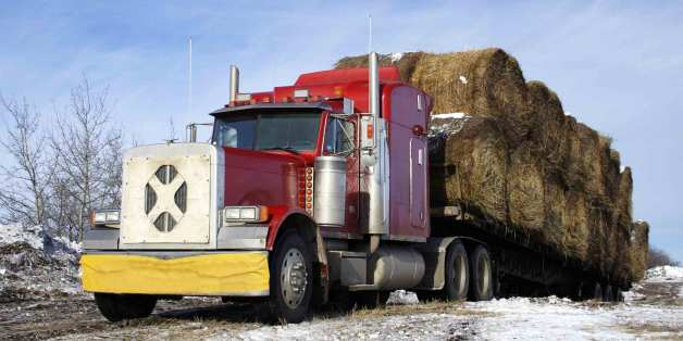 Senators Support One-Year ELD Mandate Extension for Livestock Haulers