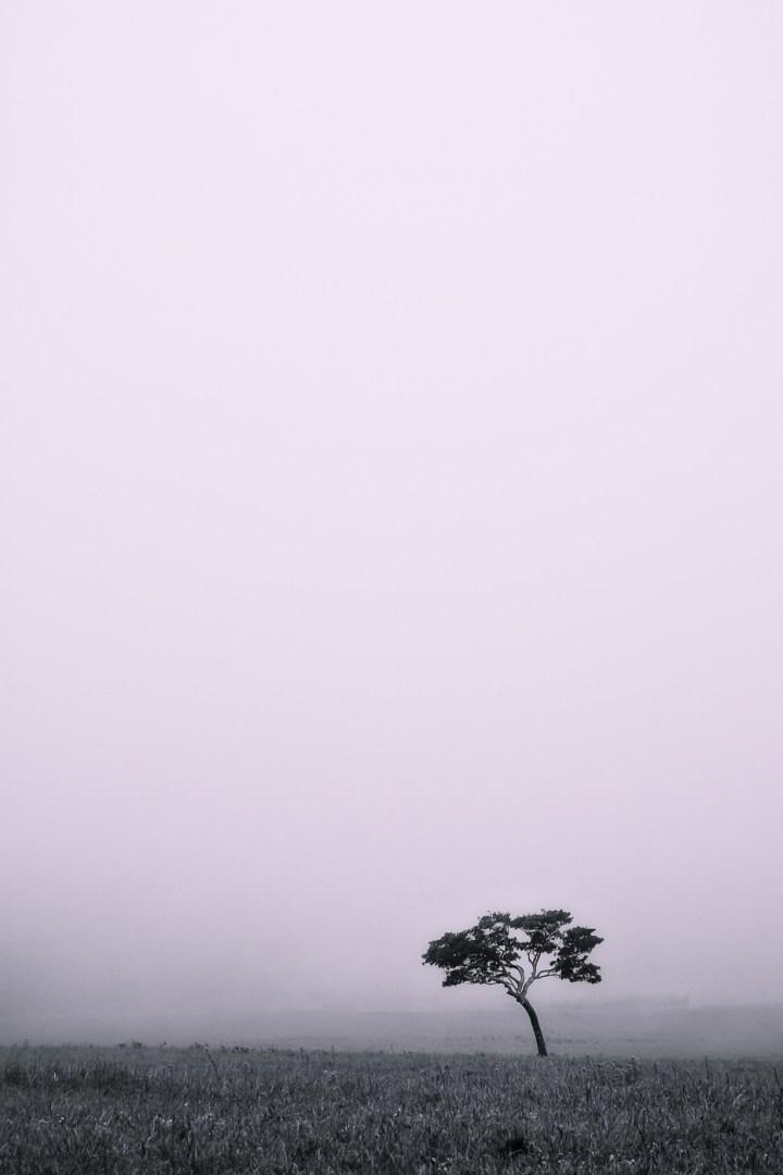 A Foggy Day - Photo