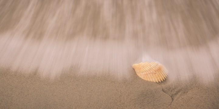 See Shell - Shell - Photo
