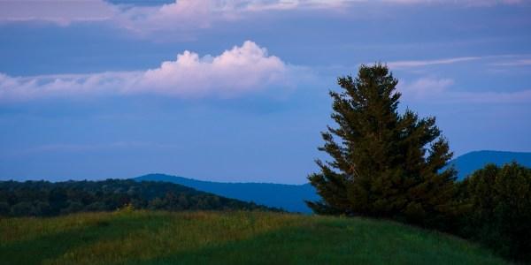 Evening Blues - Tree - Photo