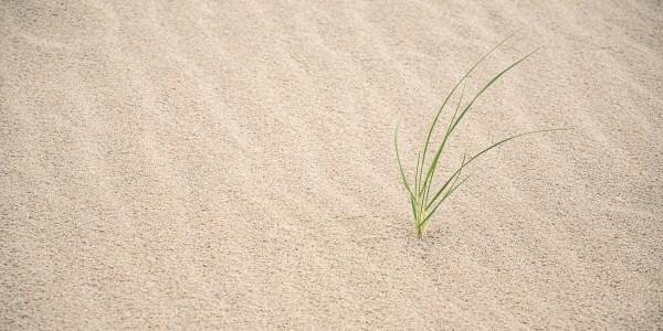 Like Grass On A Beach - Grass - Photo