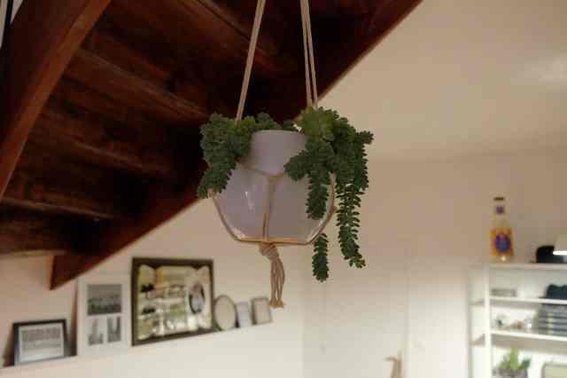plante entrée location saisonniere