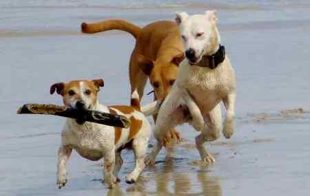 gites acceptant les chiens