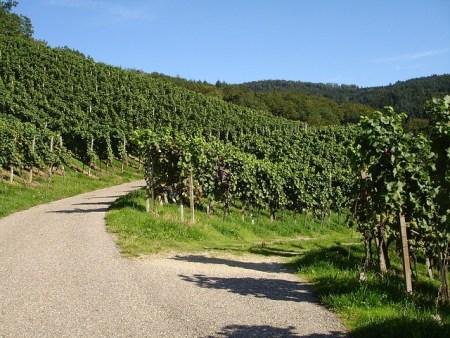 La route des vins en Provence