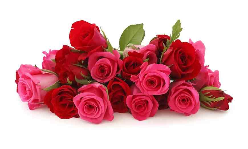 Signification Des Roses : Bouquets de 1 à 100 roses