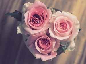 nombre de roses dans un bouquet