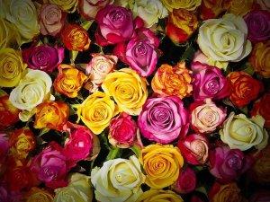 bouquet de rose mixte