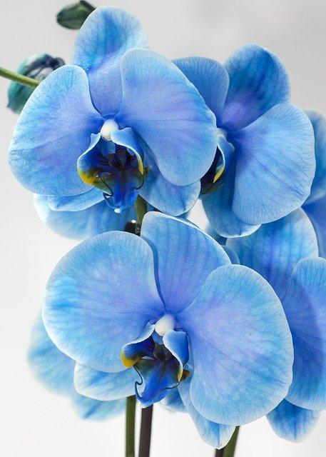 Top 55 Fleurs Bleues : Images + Astuces de Jardinier