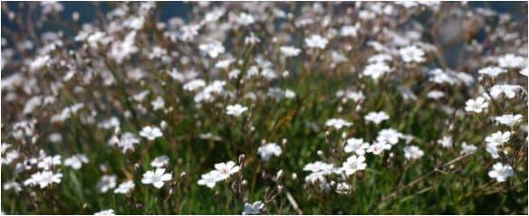 300 noms de fleurs