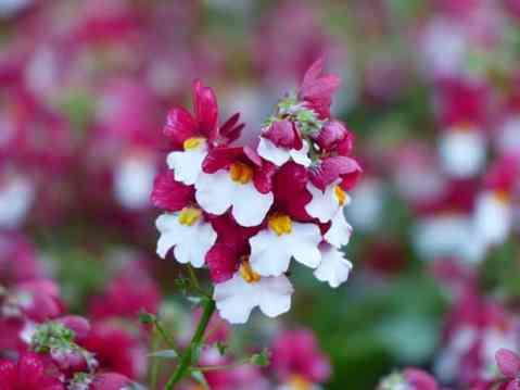 300 boms de fleur