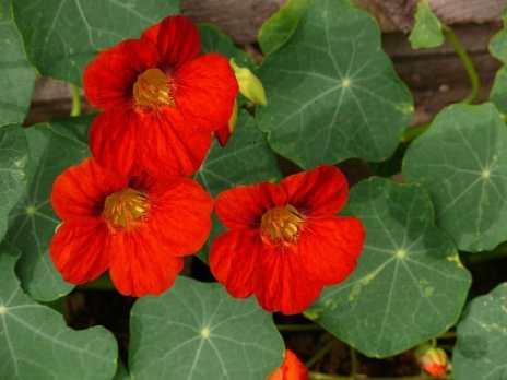 nom de fleur